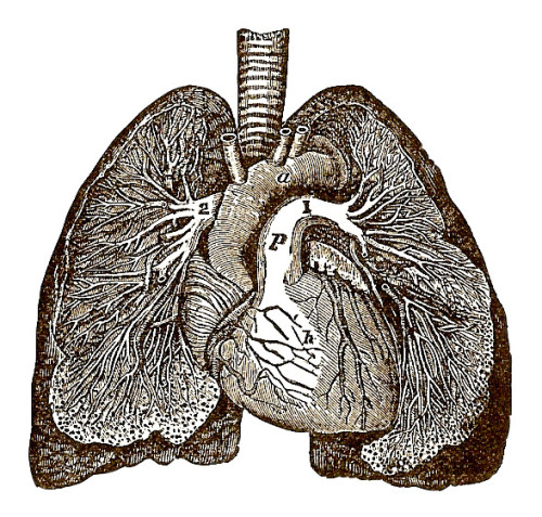 Heart and Lungs - ML